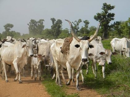 New report highlights various dimensions to farmers-herders conflict in Nigeria